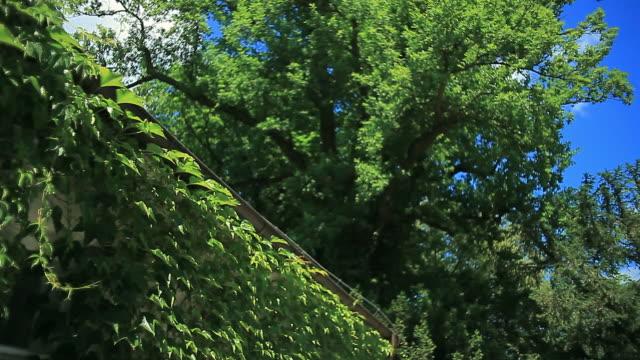 青い空に緑を葉します。ツタに覆われた家 - 枝点の映像素材/bロール