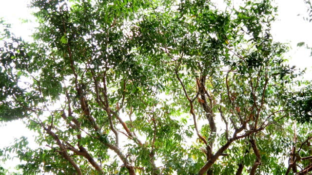 vídeos y material grabado en eventos de stock de hojas de color verde sobre fondo blanco - foco difuso