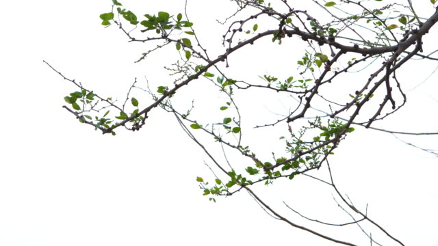 green leaves on white background - lush foliage stock videos & royalty-free footage