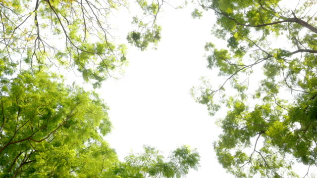 green leaves on white background - soft focus stock videos and b-roll footage