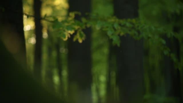 vídeos de stock e filmes b-roll de green leaves rustle in deep forest at dawn - oscilar