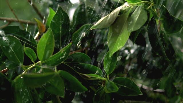 cu slo mo green leaves shaking in wind during rain / canyon lake, texas, usa - canyon lake stock videos & royalty-free footage