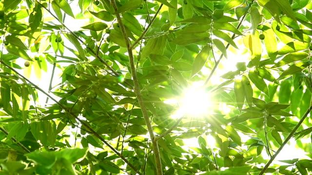 Green leaves sunshine