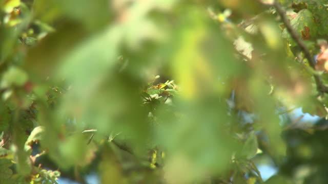 hd: grüne blätter - rack focus stock-videos und b-roll-filmmaterial