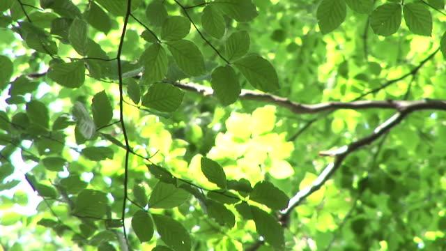 HD: Green leaves
