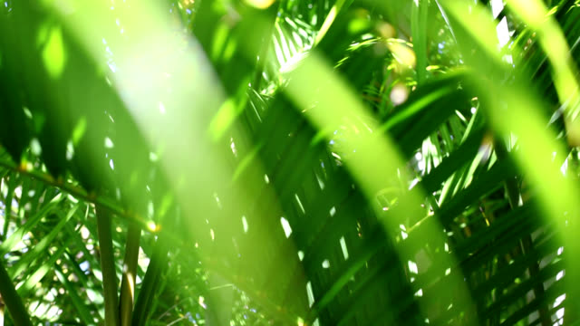 green leaves - palm tree stock videos & royalty-free footage