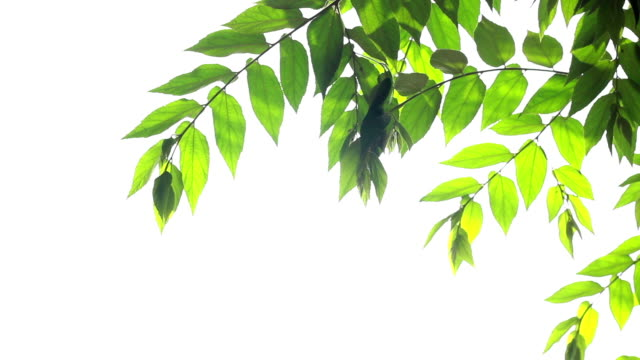 green leaves - silhouette stock videos & royalty-free footage