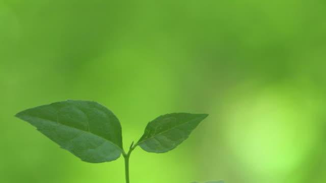 cu green leaves - 苗点の映像素材/bロール