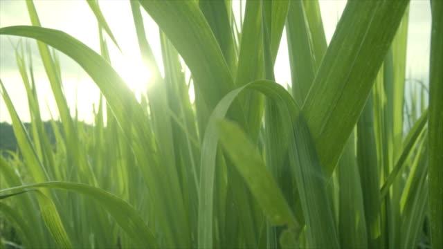 vidéos et rushes de feuilles vertes - branche partie d'une plante