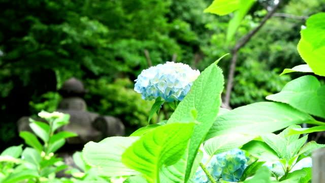 vídeos de stock, filmes e b-roll de folhas verdes com flor - padrão natural