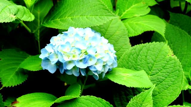 vídeos y material grabado en eventos de stock de hojas verdes con flores - diseño natural
