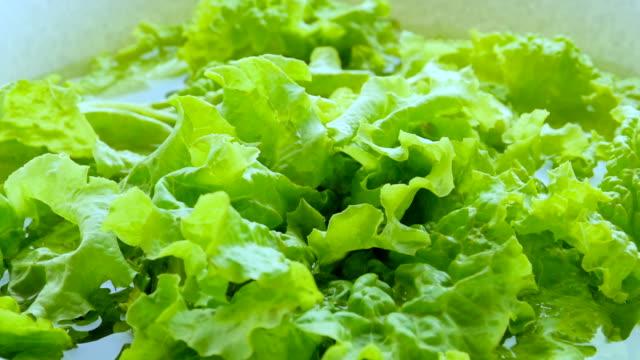 green lettuce, close-up