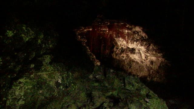 green lichen and rust colored vegetation grow in kaumana cave, hawaii. - 地衣類点の映像素材/bロール