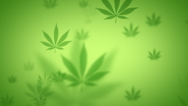 green looping background cannabis animation - cannabis sativa stock videos and b-roll footage