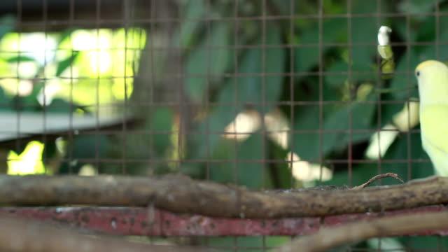 グリーン love 鳥 - 捕らえられた動物点の映像素材/bロール