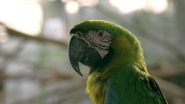 green macaw bird in nature background - becco video stock e b–roll