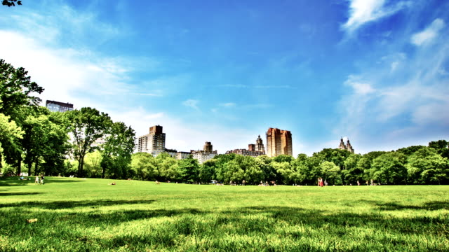 Green meadow in New York Central Park