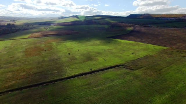 航空写真: 放牧牛の緑の牧草地 - クワッドコプター点の映像素材/bロール