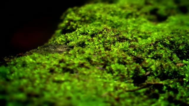 Green moss and ants