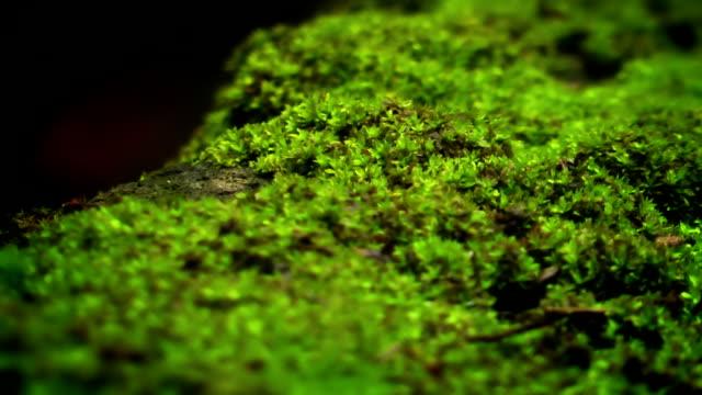 vídeos de stock, filmes e b-roll de musgo verde e formigas - musgo