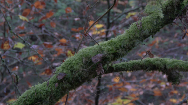 Grünes Moos und toten Blätter im feuchten schottischen Wald