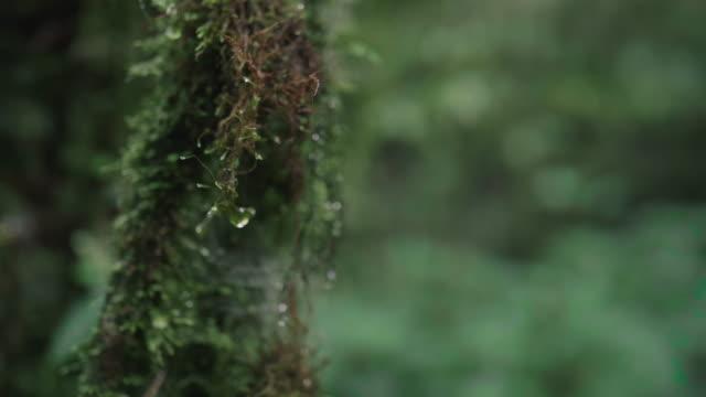 vídeos y material grabado en eventos de stock de verde musgo en el bosque - musgo flora