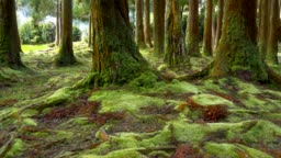Green moss on the ground and trunks of trees in the forest. Sao Miguel Island, Portuguese archipelago of the Azores. Steadicam shot.