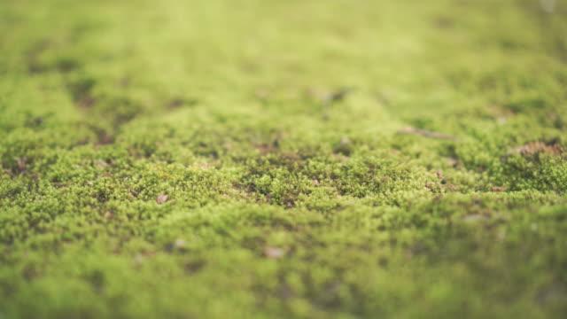Groene mos, rechts pannen