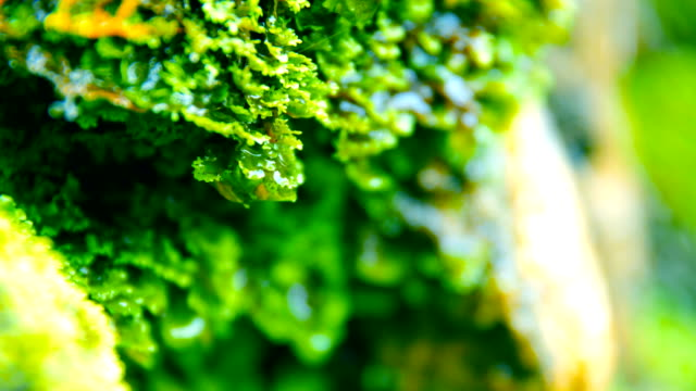 green moss - moss stock videos & royalty-free footage