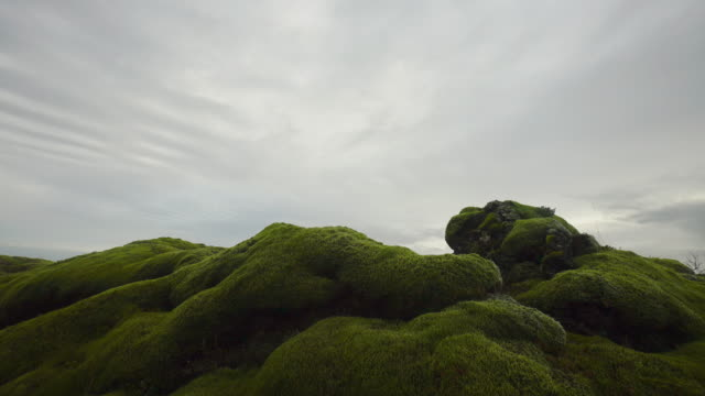 green moss,iceland. - moss stock videos & royalty-free footage