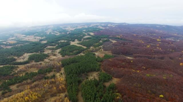 航空写真: 緑山の針葉樹林 - クワッドコプター点の映像素材/bロール