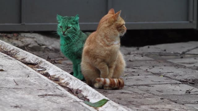 a green painted cat looking for a food in the black sea town of varna east of the bulgarian capital sofia friday dec 05 2014 - bulgaria stock videos & royalty-free footage