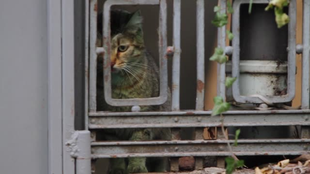 A green painted cat looking for a food in the Black sea town of Varna east of the Bulgarian capital Sofia Friday Dec 05 2014