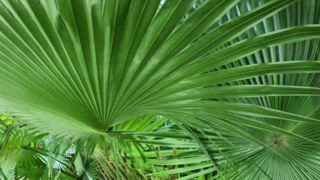 green palm leaf background - palm leaf stock videos & royalty-free footage