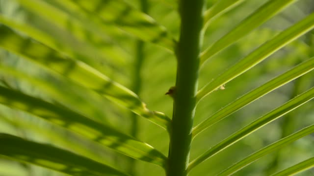 green palm leaf nature backgrounds - palm leaf stock videos & royalty-free footage