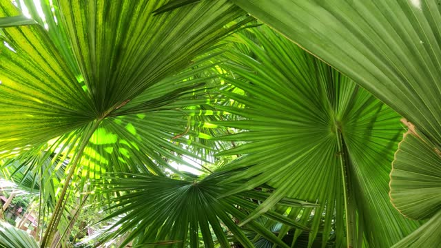 green palm leaf with behind - palm leaf stock videos & royalty-free footage