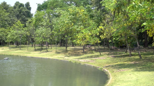 green park peaceful in center of town, bangkok thailand - realisticfilm stock videos and b-roll footage