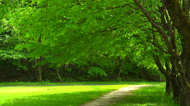 green park - natural parkland stock videos & royalty-free footage