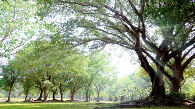 グリーンパーク - 庭点の映像素材/bロール