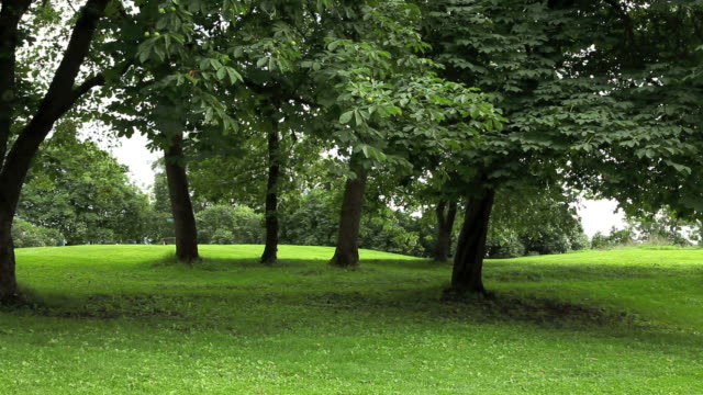 green park  with large old decideous trees and shaded areas. - lockdown viewpoint stock videos & royalty-free footage