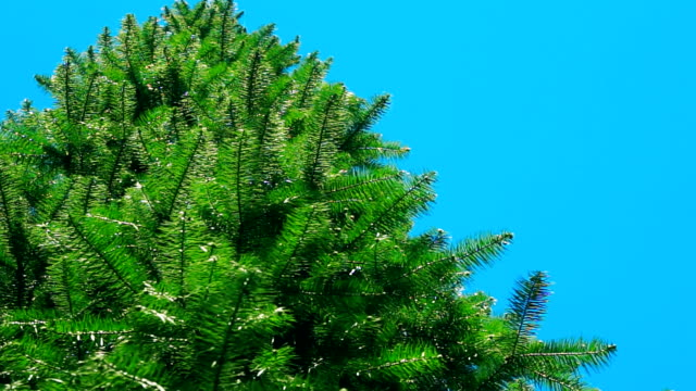 green pine and blue sky. - named wilderness area stock videos & royalty-free footage