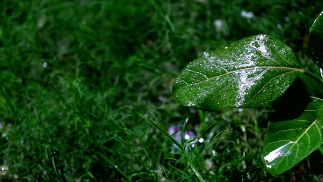 green plant and refreshment rain - water form stock videos and b-roll footage