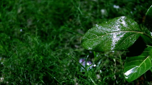 vídeos de stock, filmes e b-roll de chuva verde da planta e do refresco - water form