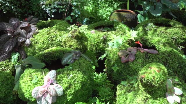 Green plant grass moss