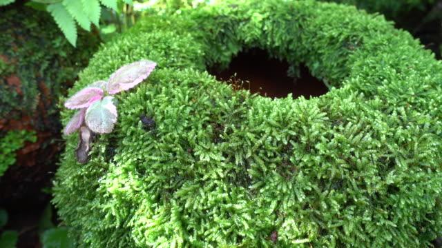 Grön växt gräs mossa