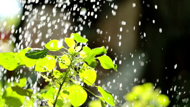 green plants in the rain,slow motion., Slow motion