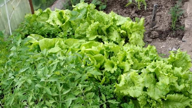 Groene planten voedingsbodem in de serre in HD