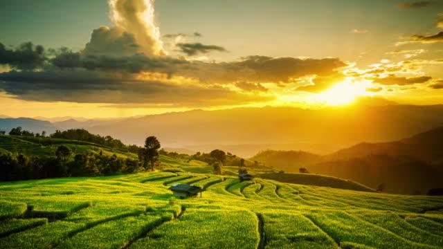 green rice field in pa bong piang Chiangmai Thailand