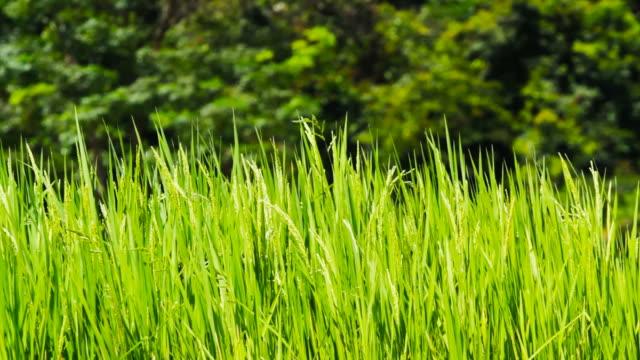 緑色の田園 - 整形式庭園点の映像素材/bロール