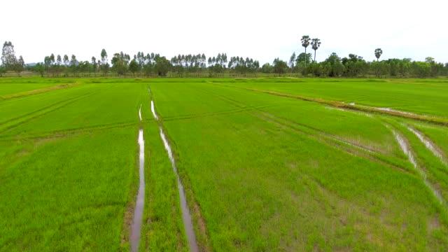 vídeos y material grabado en eventos de stock de campo de arroz verde con drone, video aéreo - rice paddy